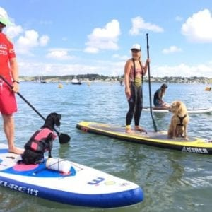 Dogs on SUP boards
